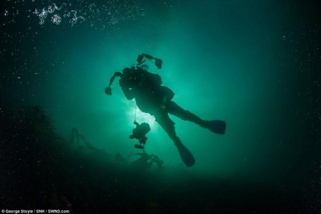 """mergulhadores expedição disseram que sentiram o privilégio de estar entre os animais """"de outro mundo"""" como visitantes para o seu meio marinho"""