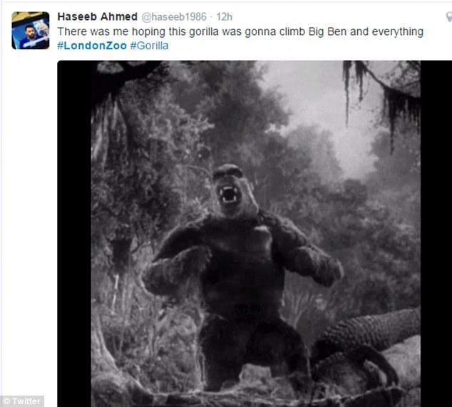 Image result for meme of kumbuka gorilla london zoo