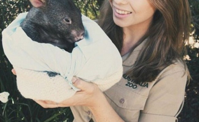 Bindi Irwin 18 Debuts In Maxim S Hot 100 Countdown