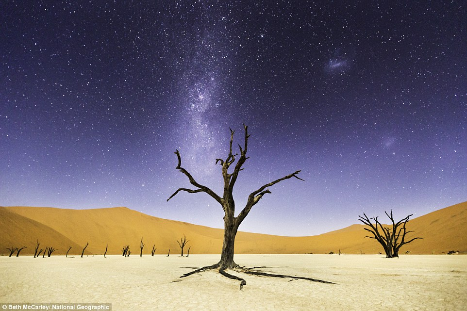 Namib-Naukluft Park, Namibia:  In Deadvlei, a camel thorn tree stands tall underneath a star-studded sky