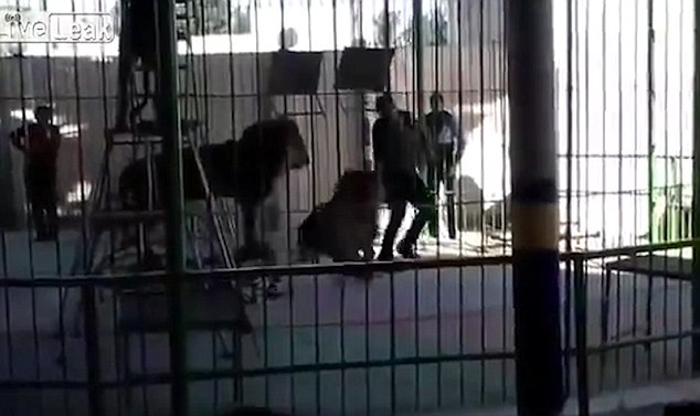 In the shocking incident, the lion suddenly pounded on the trainer in front of an audience