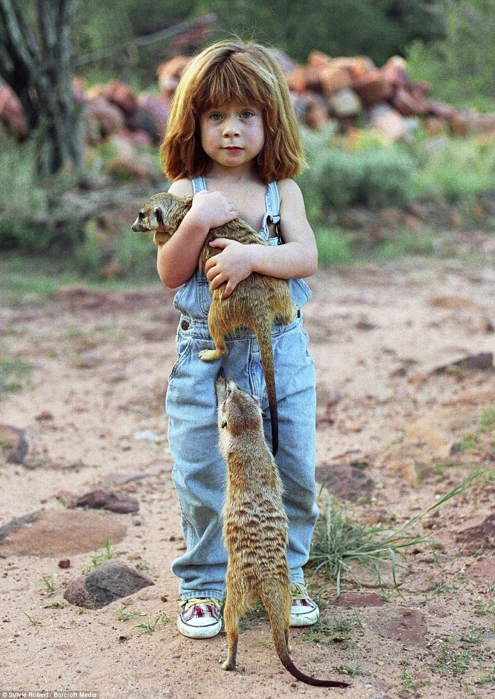 The young girl playing with two meerkats at the age of six in a magical image taken in Namibia