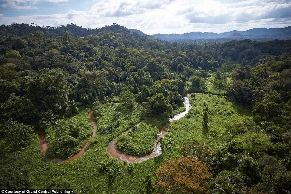 Image result for honduran fer de lance