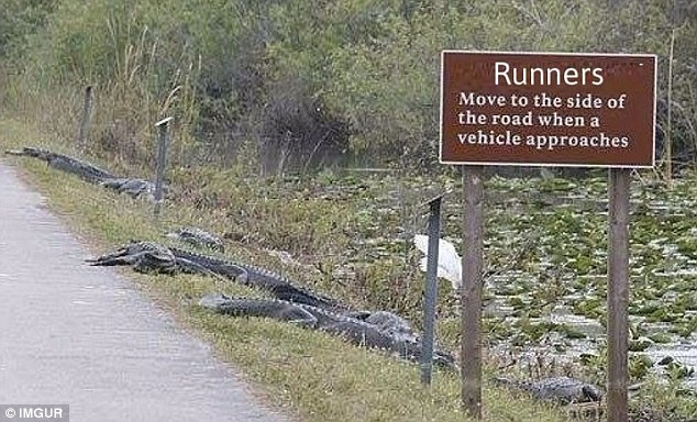 This sign, spotted in Florida, is so effective that even the local alligators take heed of it