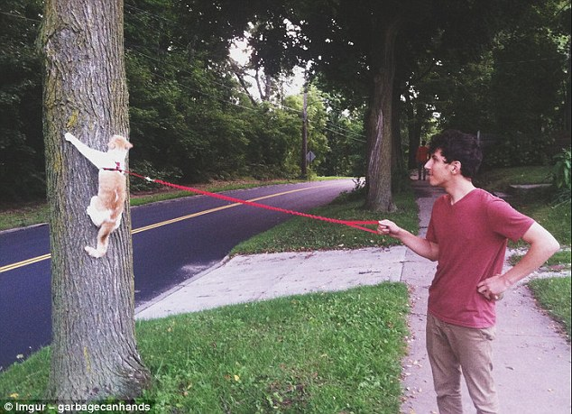 This owner probably didn't invest in a harness for his cat with the intention of walking it up a tree