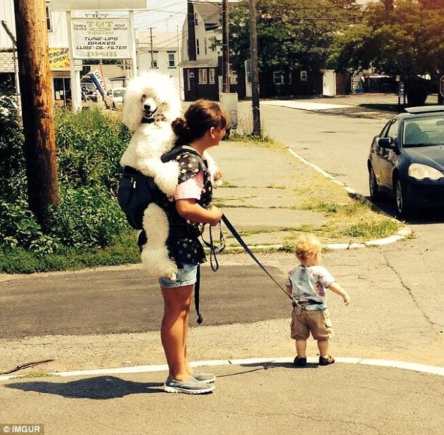Perhaps this woman was just very bored on the day she decided to shake things up by switching her dog-toddler apparatus
