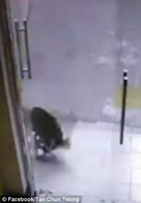 Dog crashes into glass door head-on while chasing a cat ...