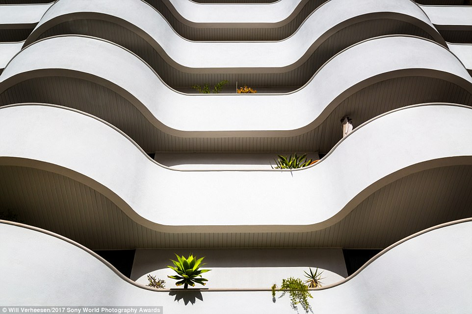 Photographer Will Verheesen commented on his picture: 'Having no gardens people try to create their own way of looking at plants in their limited surroundings. This image was taken in Lisbon, Portugal. I wanted to capture the cold white balcony during midday. Looking up enhances the view'