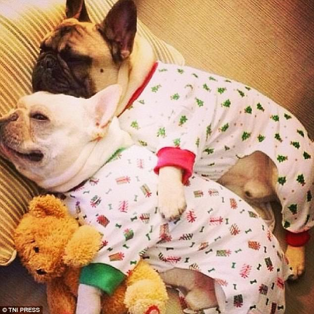 sofa sets online uk alessandro leather power motion photos capture puppies dressed in pyjamas | daily mail