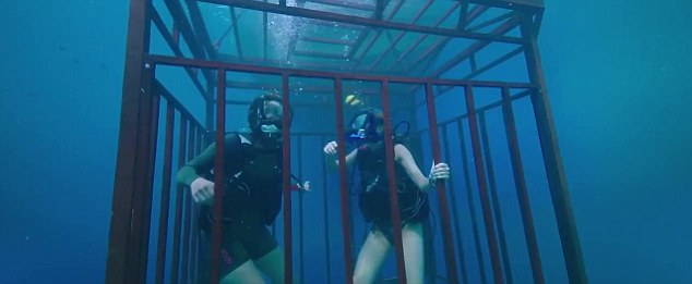 Image result for 47 metres down