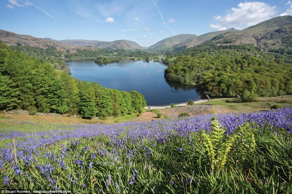 Blooming lovely: A shot taken from Loughrigg Terrace looking down across the bluebells and lake to the village of Grasmere