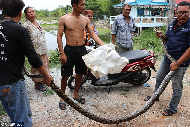 The rescue workers gather outside the home having finally got to grips with the massive snake