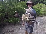 Crazy:An Australian wildlife enthusiast shocked his social media followers when he dived into a hole in the ground and emerged with a giant mud crab in his hands