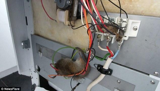 Wiring Under Kitchen Island
