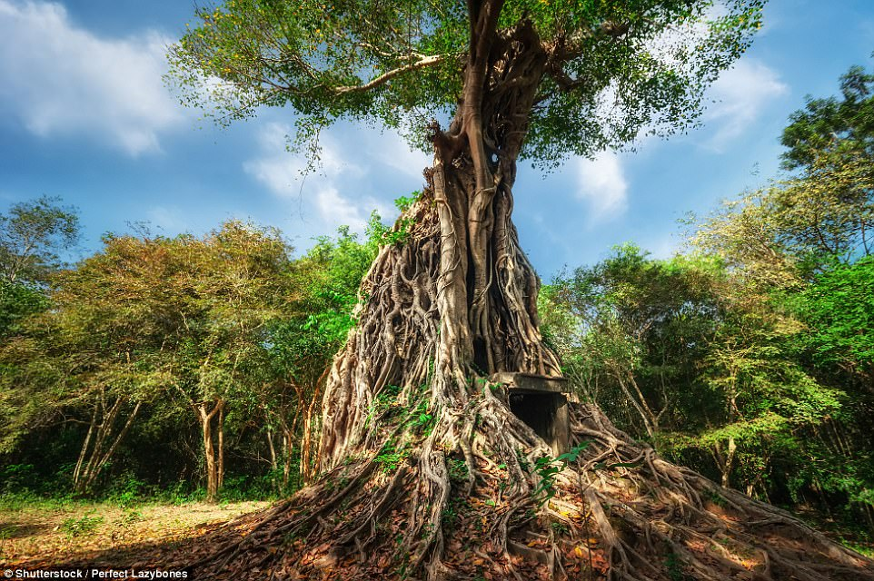 Tree-mendous! The Temple Zone of Sambor Prei Kuk in Cambodia, translates to mean 'the temple in the richness of the forest'