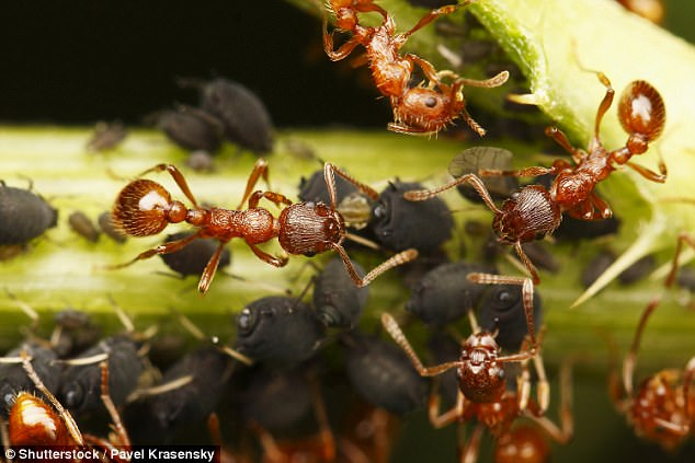 Ants have two stomachs: one to hold food for themselves, and one for others. It enables some ants to look after the nest, while others forage