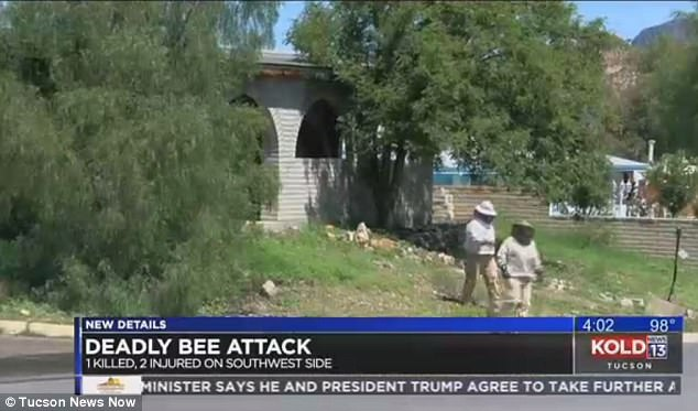 The landscaper who survived told officials the first landscaper approached him while he was being attacked by the bees