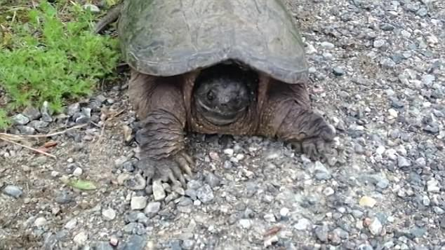 Image result for Annoy Turtles