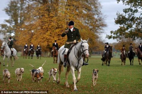 A set of draconian new rules govern trail-hunting across all the National Trust's roughly 2,500 square miles of England and Wales (stock photo)