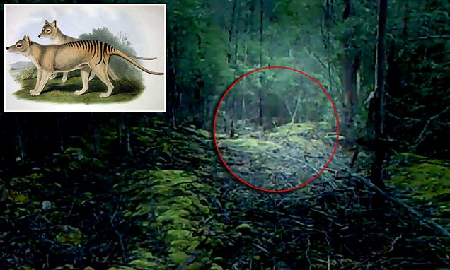 Hobart footage to show the Tasmanian Tiger still exists