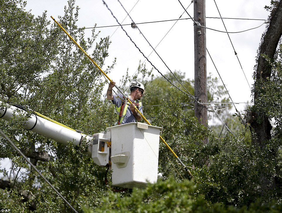 A worker trims branches from trees near power lines in a downtown neighborhood in Orlando, Florida in preparation for Irma on Friday