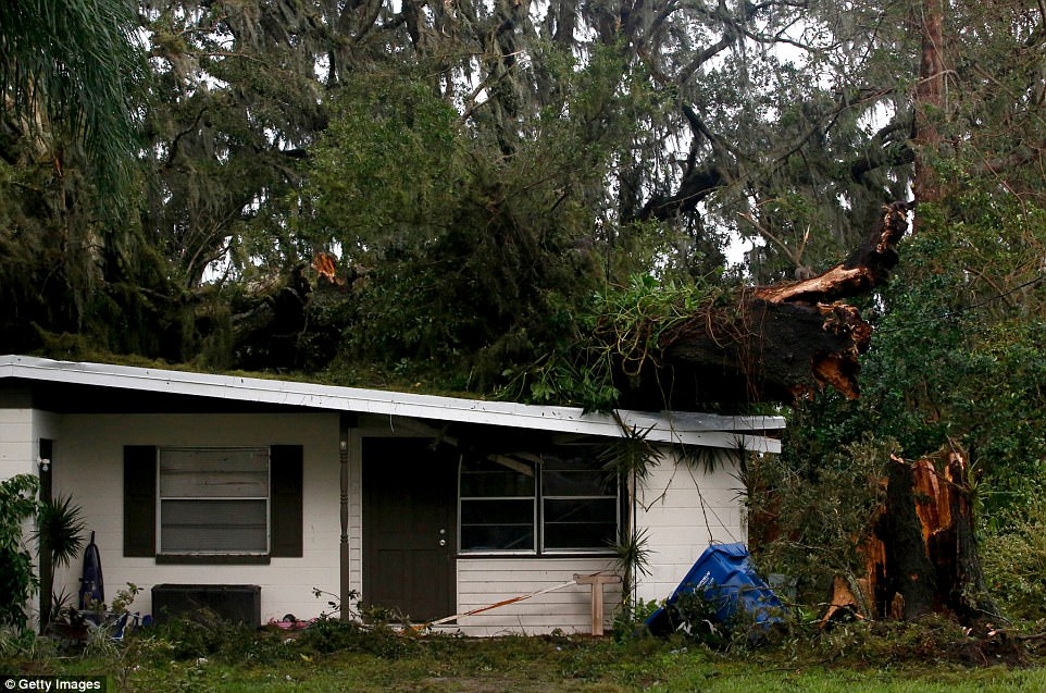 A large tree is seen laying on top of a home after high winds from Hurricane Irma came through the area on Monday in Fort Meade, Florida