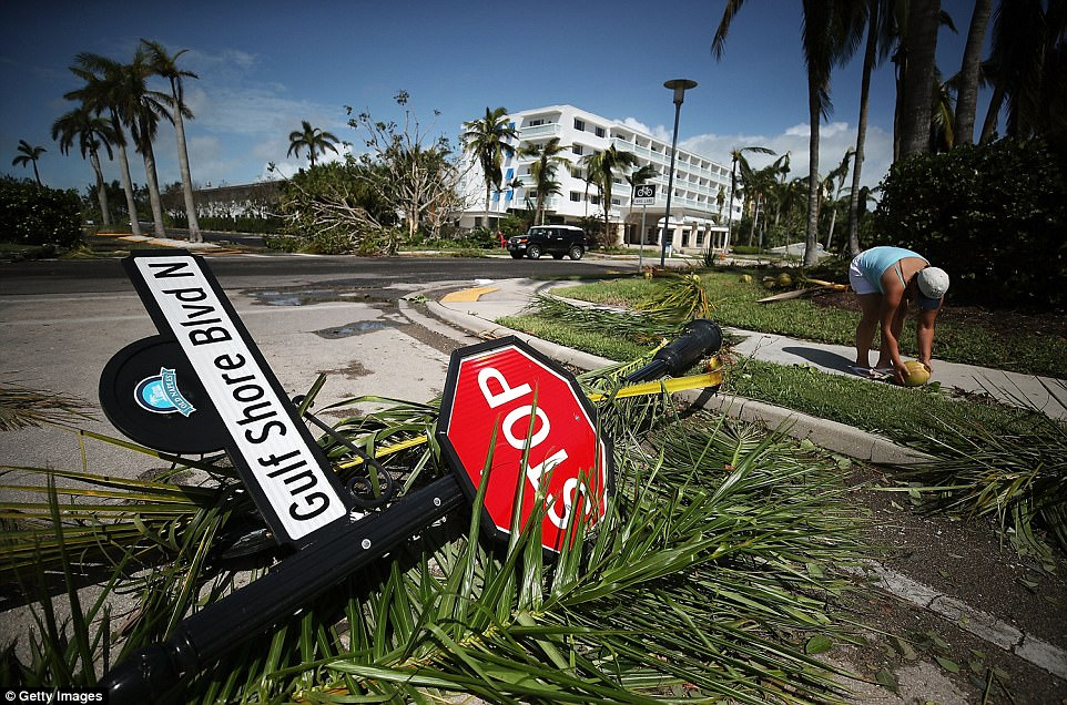 ouis Castro picks up a coconut downed by the winds of Hurricane Irma on September 11, 2017 in Naples, Florida