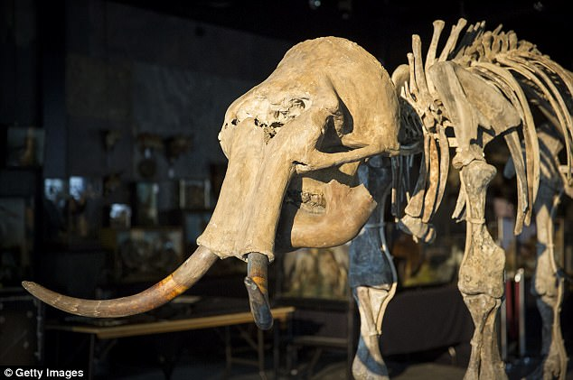 The family consists of a male and female mammoth, an adolescent daughter and a one-year-old infant