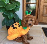 Kmart Dog Costumes