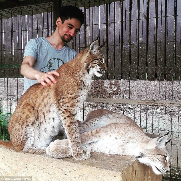 Happier times: The couple owned several reptiles as well as bobcats, who they ran another YouTube channel for