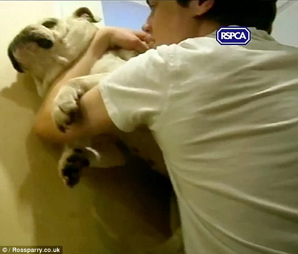Andrew Frankish is seen choking his young pet bulldog against the wall while his brother Daniel films the abuse
