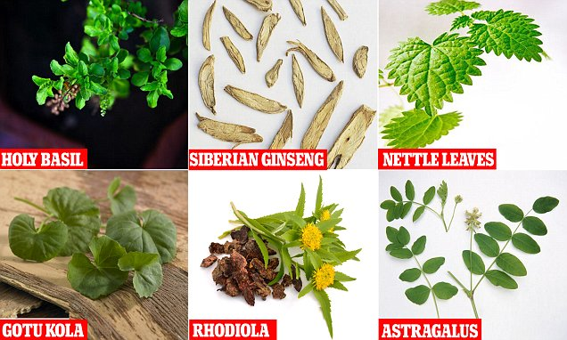 Ten super herbs that can improve your health