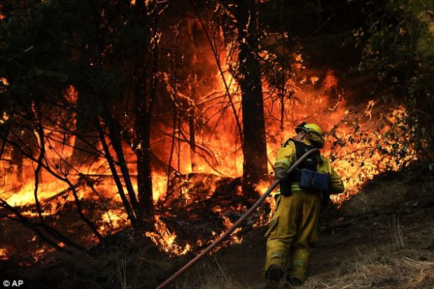 A firefighter carries a water hose to put out a fire near Calistoga, Californai on Friday
