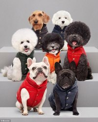 The 280 Moncler jacket that's designed for your dog