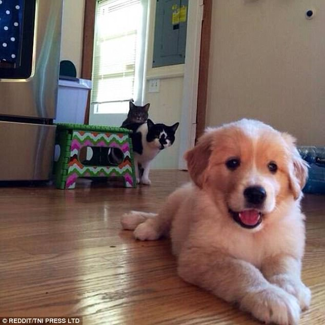 best sofa for cats owners upholstery cost sydney the funniest photos of and dogs | daily mail online