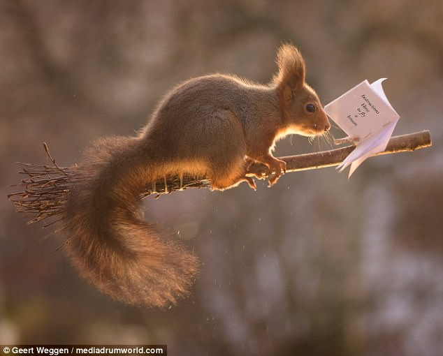 Squirrels Play Harry Potter's Favourite Sport Quidditch