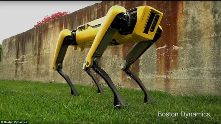 The robotic canine is shown trotting around a yard, with the promise that more information from the notoriously secretive firm, recently bought by SoftBank, is 'coming soon'.