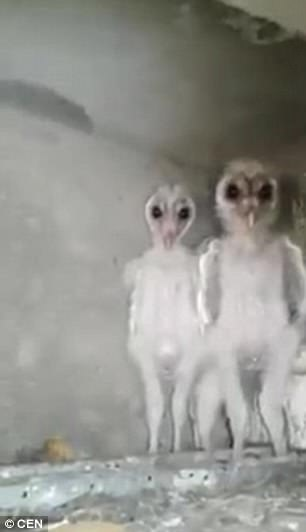 Baby Owls Legs : Birds, Spooky, Mistaken, Aliens, India, Daily, Online