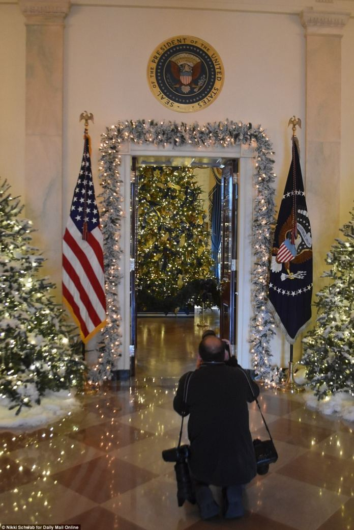 A photographer kneels and grabs a shot of the Endeavor, Wisconsin-grown tree that was installed in the White House Blue Room