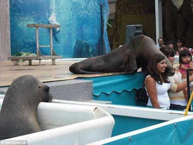 Jealousy doesn't just affect humans - or at least that's what this photo suggests