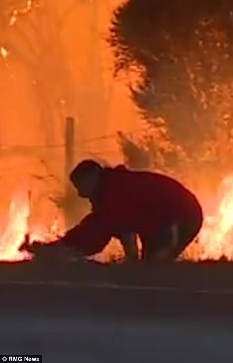 In one video of the blazes, a man can be seen running around a flame-filled area trying to rescue a wild rabbit