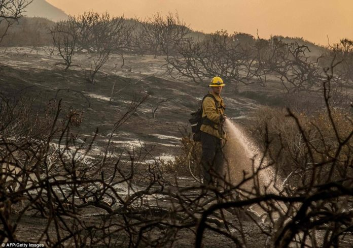 A firefighter hoses down burned bracken alongside the 101 Highway in order to make sure no more fires are kicked up by any embers carried by the strong Santa Ana winds