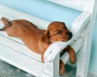Cutest pictures of sleeping dogs in unlikely positions ...