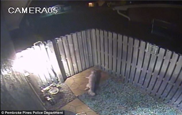 On December 3, an unidentified man entered the yard of a home in the Pasadena Lakes section of Pembroke Pines