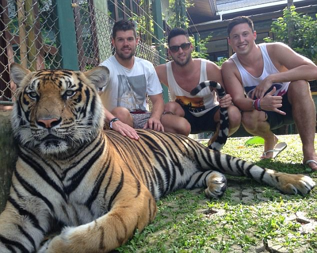 Matt (right) had a wild blow-out£500,000 trip with his brother Pete (centre) and friends after scooping the enormous prize. They are pictured at a tiger sanctuary in Thailand
