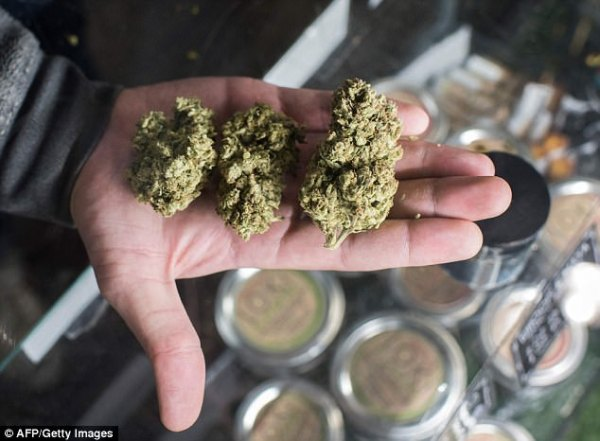 Marijuana could net so much money for California that sales may even surpass beer profits. On Monday, January 1, retailers will be able to legally sell recreational marijuana and, in 2018 alone, dispensaries are expected to earn $3.7billion (Pictured, a budtender displays cannabis at the Higher Path medical marijuana dispensary in California, Wednesday)