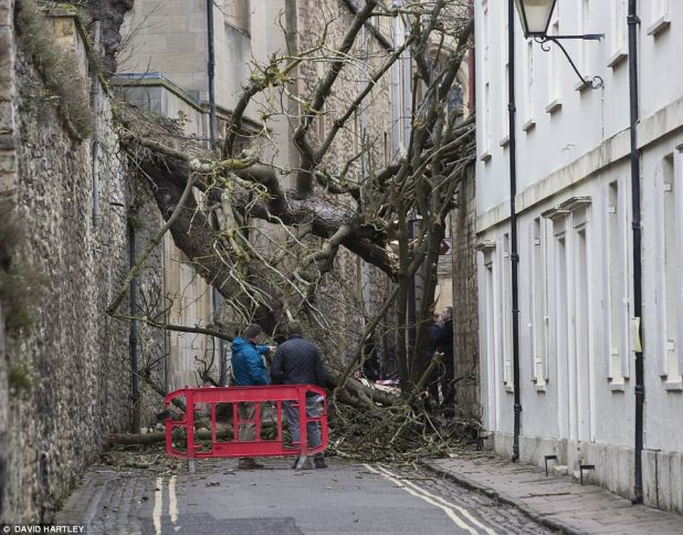 Workers salvage out regarding the tree that snapped in Magpie Lane after falling from the grounds of Oxford University's Oriel College