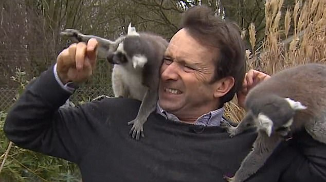 The journalist's efforts to report on the zoo's annual stock take of animals were consistently thwarted by the excitable lemurs who bit his hand more than once