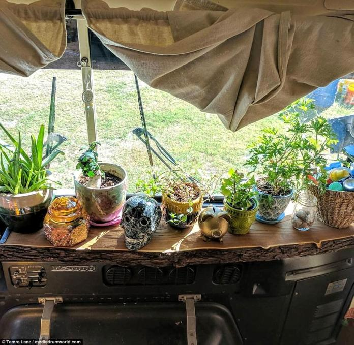 Clever: Keen to maximise space, the dashboard is packed with mint, citronella and aloe plants for medicinal use