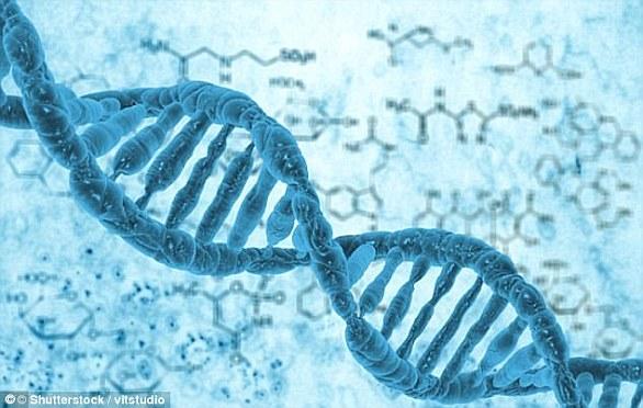 Gene cloning creates copies of genes or parts of DNA. Reproductive cloning creates copies of whole animals (stock image)